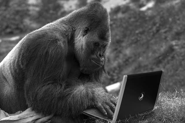 Photo of a monkey typing at a laptop