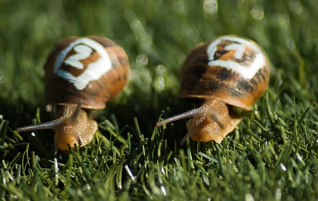 2 snails slogging on side by side. Pair programming can seem excruciatingly slow with a slow build. It's also an opportunity to speed it up!